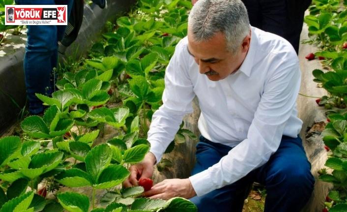 Milletvekili Savaş çilek üreticisine bereketli hasat sezonu diledi