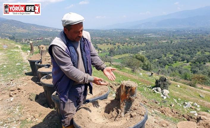 Bozdoğan'da kesilen zeytin ağaçları için vatandaşlar tepkili