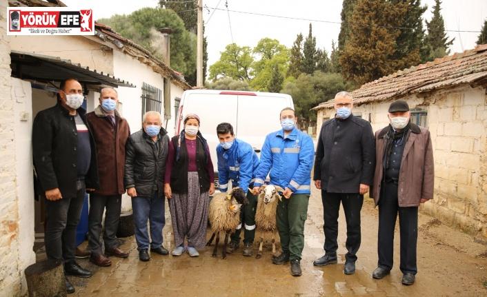 Büyükşehir Belediyesi Çine çaparını koruma altına aldı