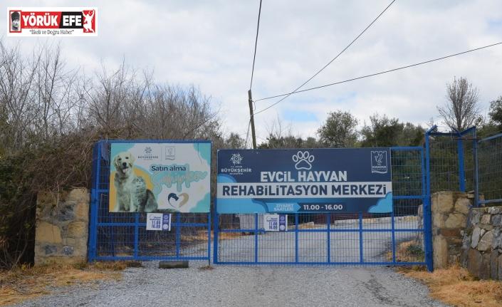 """""""Evcil Hayvan Rehabilitasyon Merkezi 10 gün içinde yeniden ziyarete açılacak"""