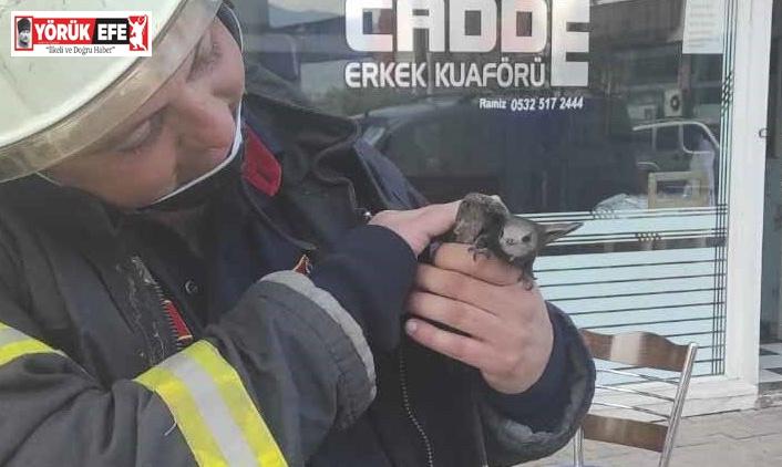 Trafo binasına sıkışan Ebabil kuşu itfaiye tarafından kurtarıldı