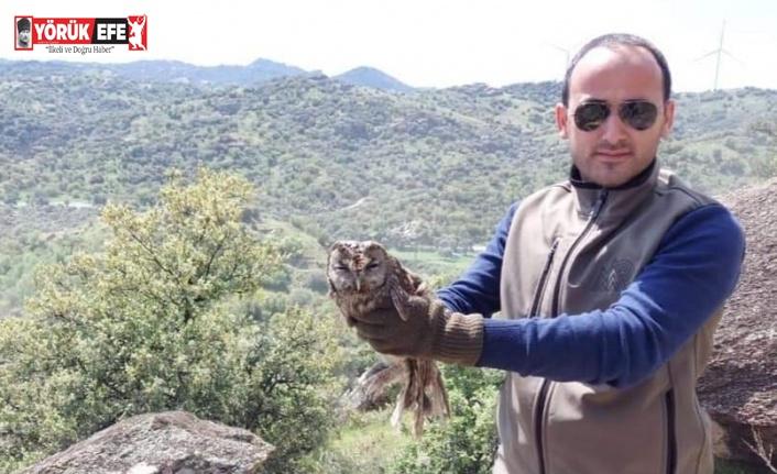 Yaralı halde devlete sığınan baykuş tedavisinin ardından doğaya salındı