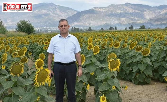 Aydın'da ayçiçeği üretiminde başarı sağlandı
