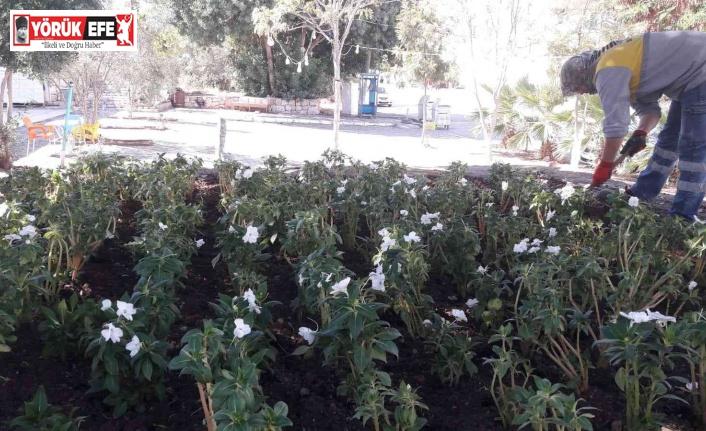 Didim'de mevsimlik çiçeklerin dikimi yapılıyor