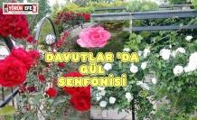DAVUTLAR 'DA GÜL SENFONİSİ