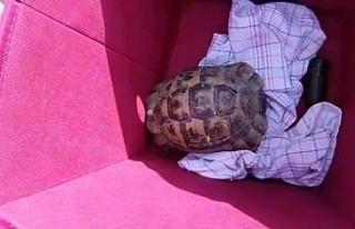 Alman gençlerden kaplumbağa duyarlılığı