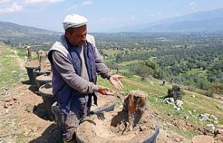 Bozdoğan'da kesilen zeytin ağaçları için vatandaşlar...