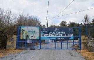 """""""Evcil Hayvan Rehabilitasyon Merkezi 10 gün içinde..."""