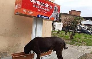 Germencik Belediyesi sokak hayvanları için beslenme...