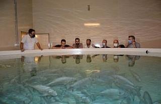 Toprak havuzda balık yetiştiren tesise teknik gezi...