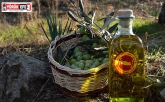 Aydın Memecik Zeytinyağı için Avrupa Birliği serüveni başlıyor