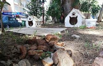 Sokak hayvanları için bırakılan bayat ekmekler, hayvanların sağlığını tehdit ediyor