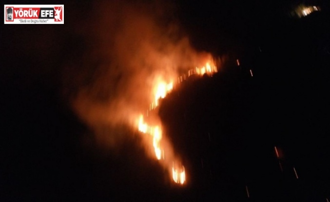 Didim'deki yangın Akbük'e sıçramadan kontrol altına alındı