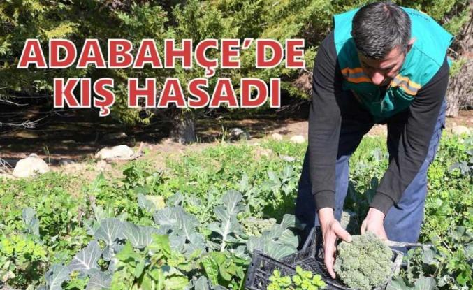 ADABAHÇE'DE KIŞ HASADI